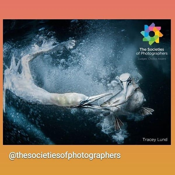 Was over the moon to of received a gold and judges choice for this image from th...