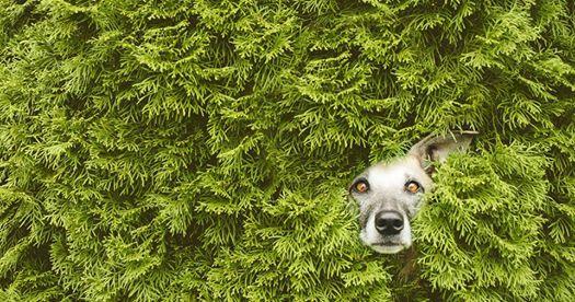 Dogsonality - Elke Vogelsang