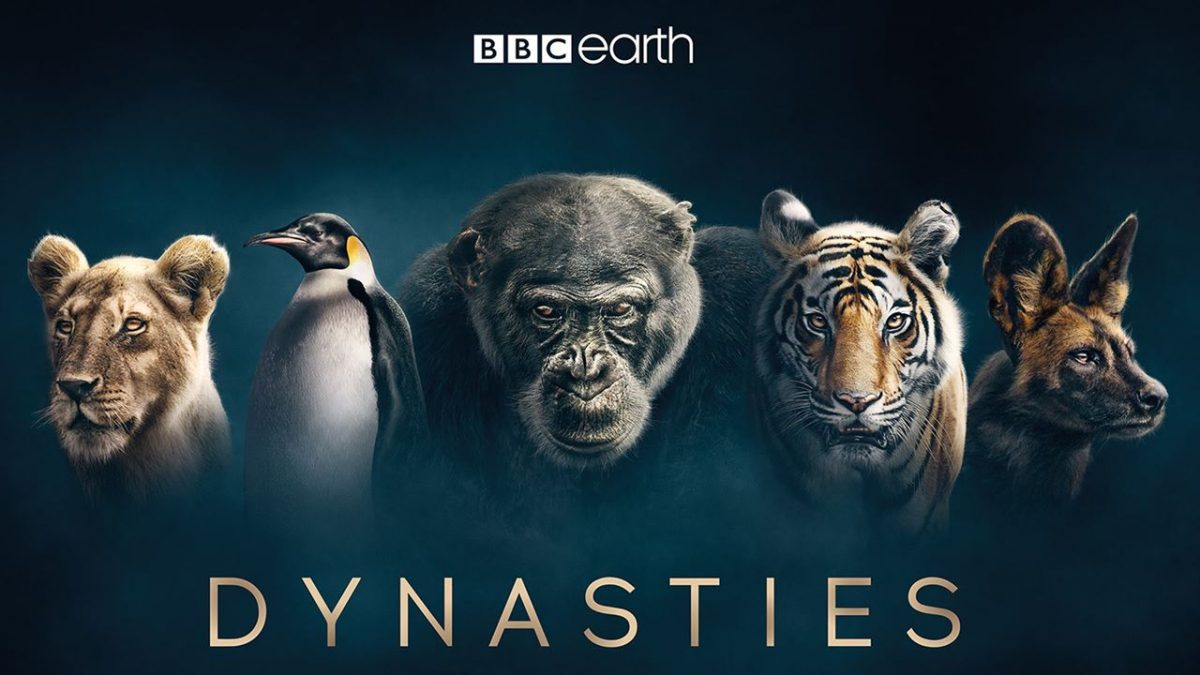 Dynasties: First Look | New David Attenborough Series