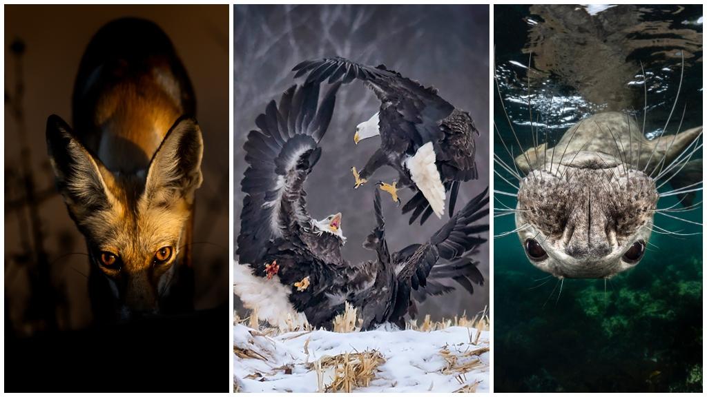 Amazing nature photos from Sony World Photography Awards 2019 - CBBC Newsround