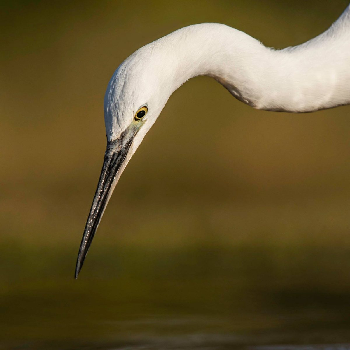 One from the Lagoon hide in Zimanga.  Su...